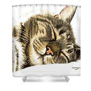 Sleeping Tabby Cat  Shower Curtain