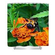 Sleepy Bumblebee Shower Curtain