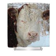Sleepy Winter Cow Shower Curtain