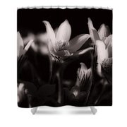 Sleepy Flowers Shower Curtain