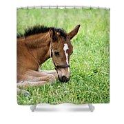 Sleepy Foal Shower Curtain