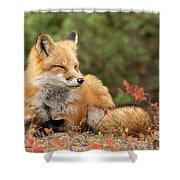 Sleepy Fox Shower Curtain