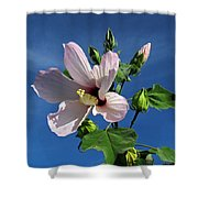 Sleepy Hibiscus Shower Curtain