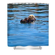 Sleepy Otter Shower Curtain