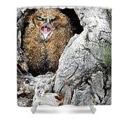 Sleepy Owlet Shower Curtain