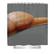 Slender Snail Shower Curtain