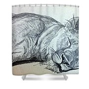 Slepping Lion Shower Curtain