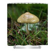 Slick Slimy Toadstool Shower Curtain