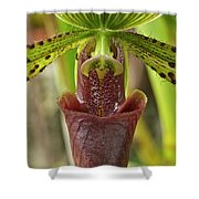 Slipper Orchid Shower Curtain