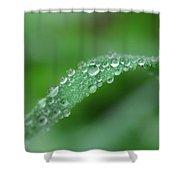 Slippery Slope Shower Curtain