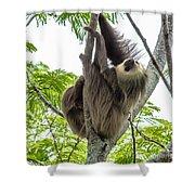 Sloth1 Shower Curtain