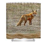 Sly Fox 5785 Shower Curtain