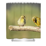 Small And Large Shower Curtain