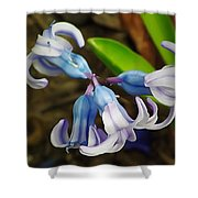 Small And Lovely Shower Curtain