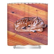 Small Deer Fawn Resting On Cedar Wood Deck Shower Curtain