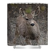 Small Fawn In Tombstone Shower Curtain