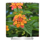 Small Flowers On A Tree Shower Curtain