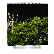 Small Forest Shower Curtain