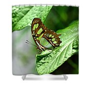 Small Green Shower Curtain