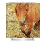 Small Horse Large Beauty Shower Curtain