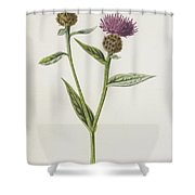 Small Knapweed  Shower Curtain