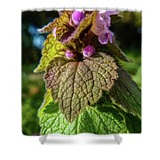 Small Mauve Flowers 7 Shower Curtain