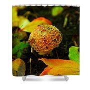 Small Mushroom In Autumn Shower Curtain