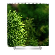 Small Plants Shower Curtain
