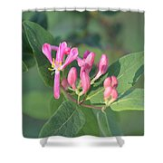 Small Purple Spring Flowers Shower Curtain