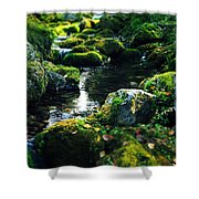 Small Stream In Green Forest Lapland Shower Curtain