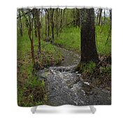 Small Stream In The Woods Shower Curtain