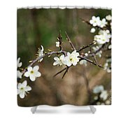 Small White Flowers Of Thorns Shower Curtain