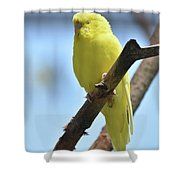 Small Yellow Budgie Parakeet In The Wild Shower Curtain