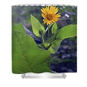Small Yellow Flower And Green Big Leaves In The Sun Light. Shower Curtain