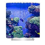 Smaller Fish In Monterey Aquarium-california  Shower Curtain