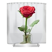 Smell The Rose Shower Curtain