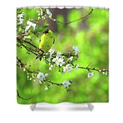 Smelling The Cherry Blossom Male  American Goldfinch Shower Curtain