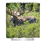 Smiling Bull Moose Shower Curtain