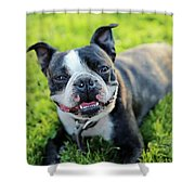 Smiling Dog Shower Curtain