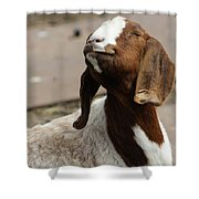 Smiling Goat  Shower Curtain