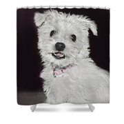 Smiling Puppy Shower Curtain