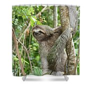 Smiling Sloth Shower Curtain