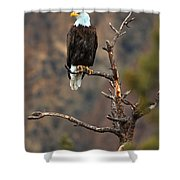 Smith Rock Bald Eagle Shower Curtain