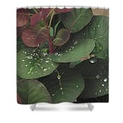 Smoke Tree Drops Shower Curtain