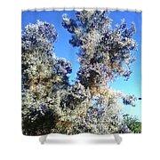 Smoke Tree In Bloom With Blue Purple Flowers Shower Curtain