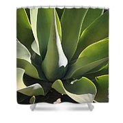 Smooth Agave Shower Curtain