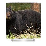 Smug Black Bear Shower Curtain