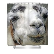 Smug Llama Shower Curtain