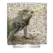 Snacking Iguana On A Concrete Walk Way Shower Curtain