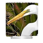 Snacking  Shower Curtain